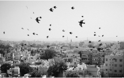 Rundreise durch Gujarat Teil II – Löwen, Tempel und Salzwüste
