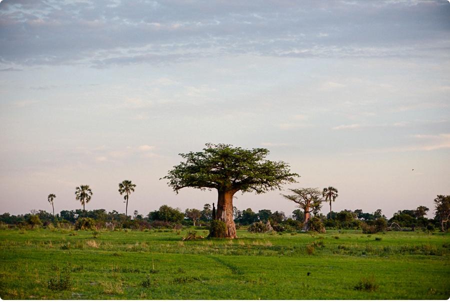 Afrika Teil1 - Von WIndhoek,Namibia nach Botswana ins Okavango Delta (105 von 118)