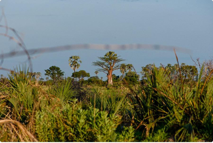 Afrika Teil1 - Von WIndhoek,Namibia nach Botswana ins Okavango Delta (108 von 118)