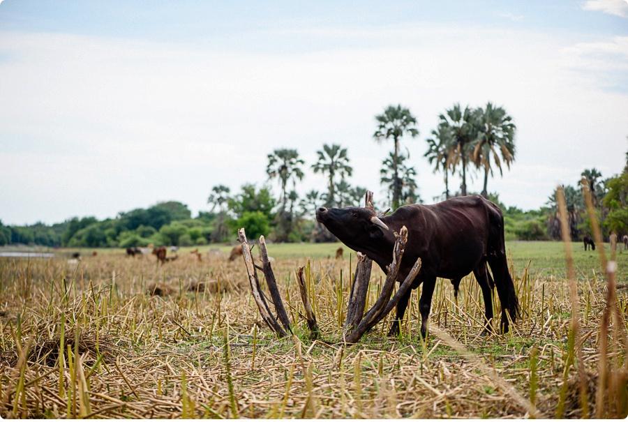 Afrika Teil1 - Von WIndhoek,Namibia nach Botswana ins Okavango Delta (113 von 118)