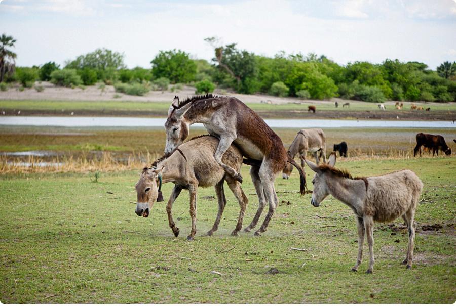 Afrika Teil1 - Von WIndhoek,Namibia nach Botswana ins Okavango Delta (114 von 118)