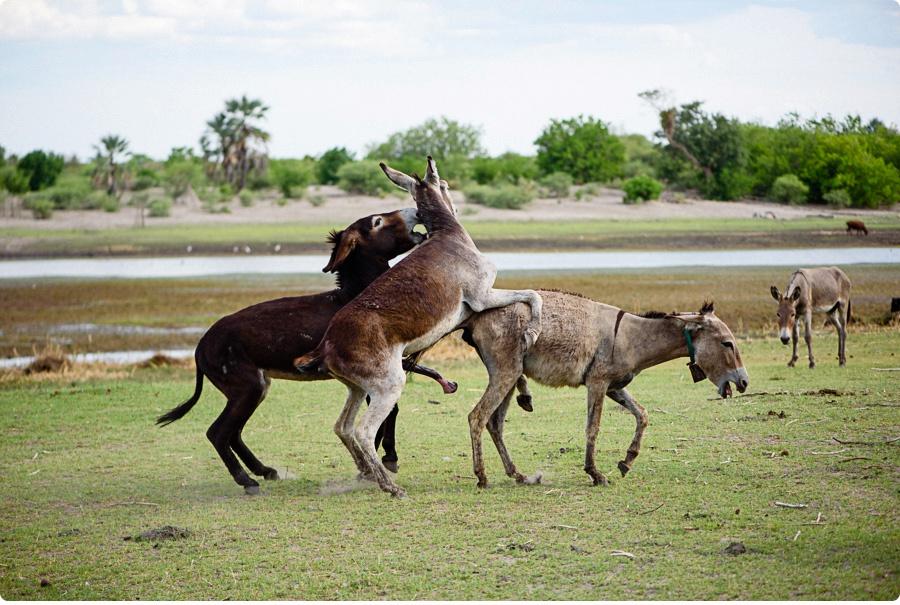 Afrika Teil1 - Von WIndhoek,Namibia nach Botswana ins Okavango Delta (115 von 118)