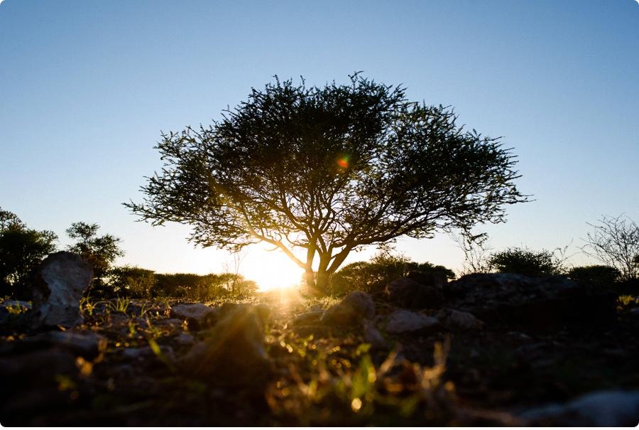 Afrika Teil1 - Von WIndhoek,Namibia nach Botswana ins Okavango Delta (13 von 118)