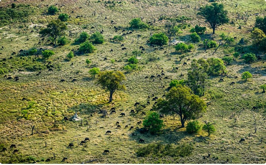 Afrika Teil1 - Von WIndhoek,Namibia nach Botswana ins Okavango Delta (29e von 9)