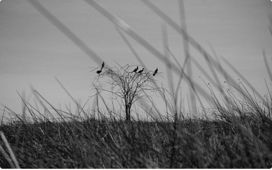 Afrika Teil1 - Von WIndhoek,Namibia nach Botswana ins Okavango Delta (36 von 118)