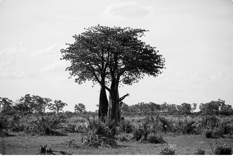 Afrika Teil1 - Von WIndhoek,Namibia nach Botswana ins Okavango Delta (65 von 118)