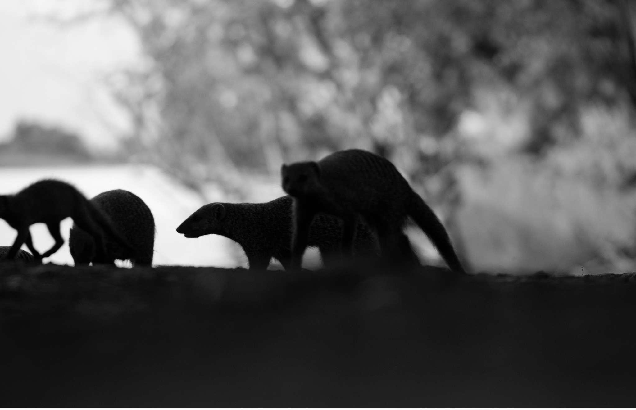Chobe Nationalpark Botswana und Victoriafalls Zambia-11