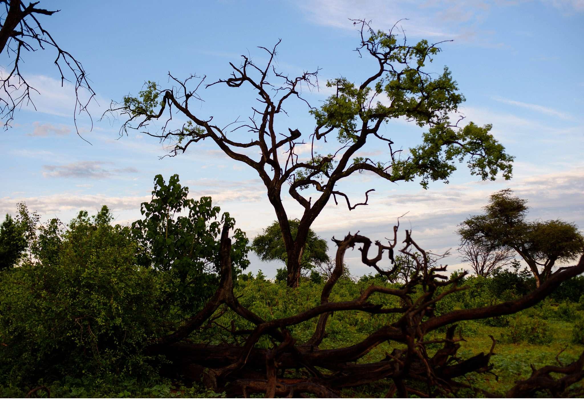 Chobe Nationalpark Botswana und Victoriafalls Zambia-19