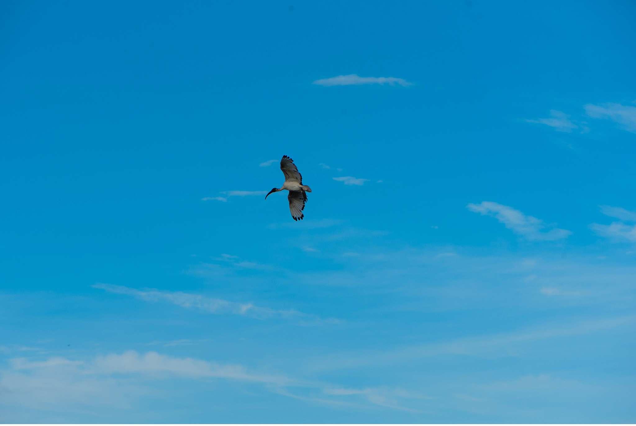 Chobe Nationalpark Botswana und Victoriafalls Zambia-24
