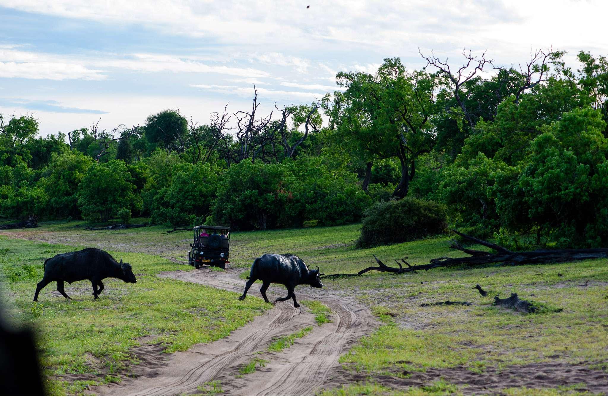Chobe Nationalpark Botswana und Victoriafalls Zambia-27