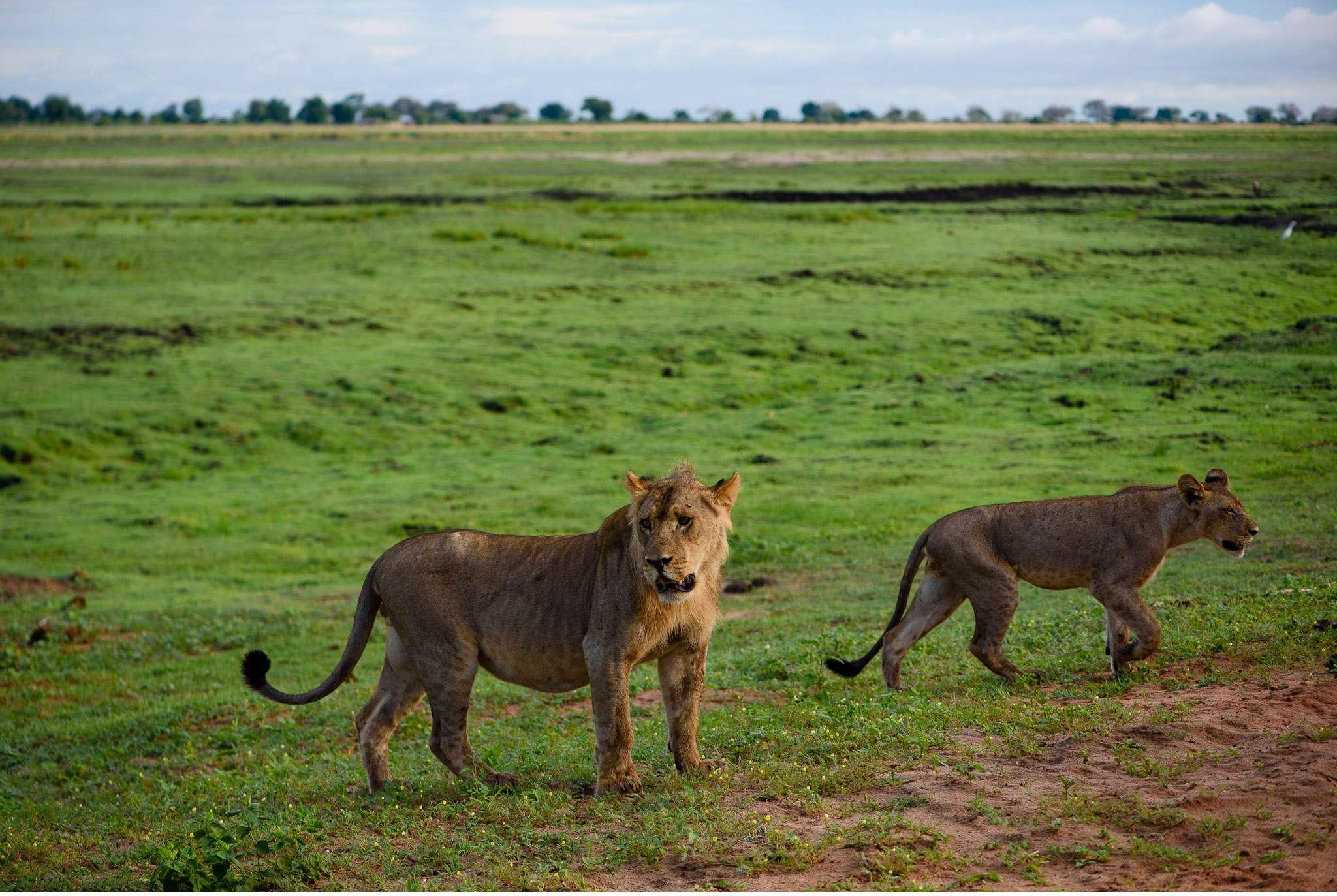 Chobe Nationalpark Botswana und Victoriafalls Zambia-32