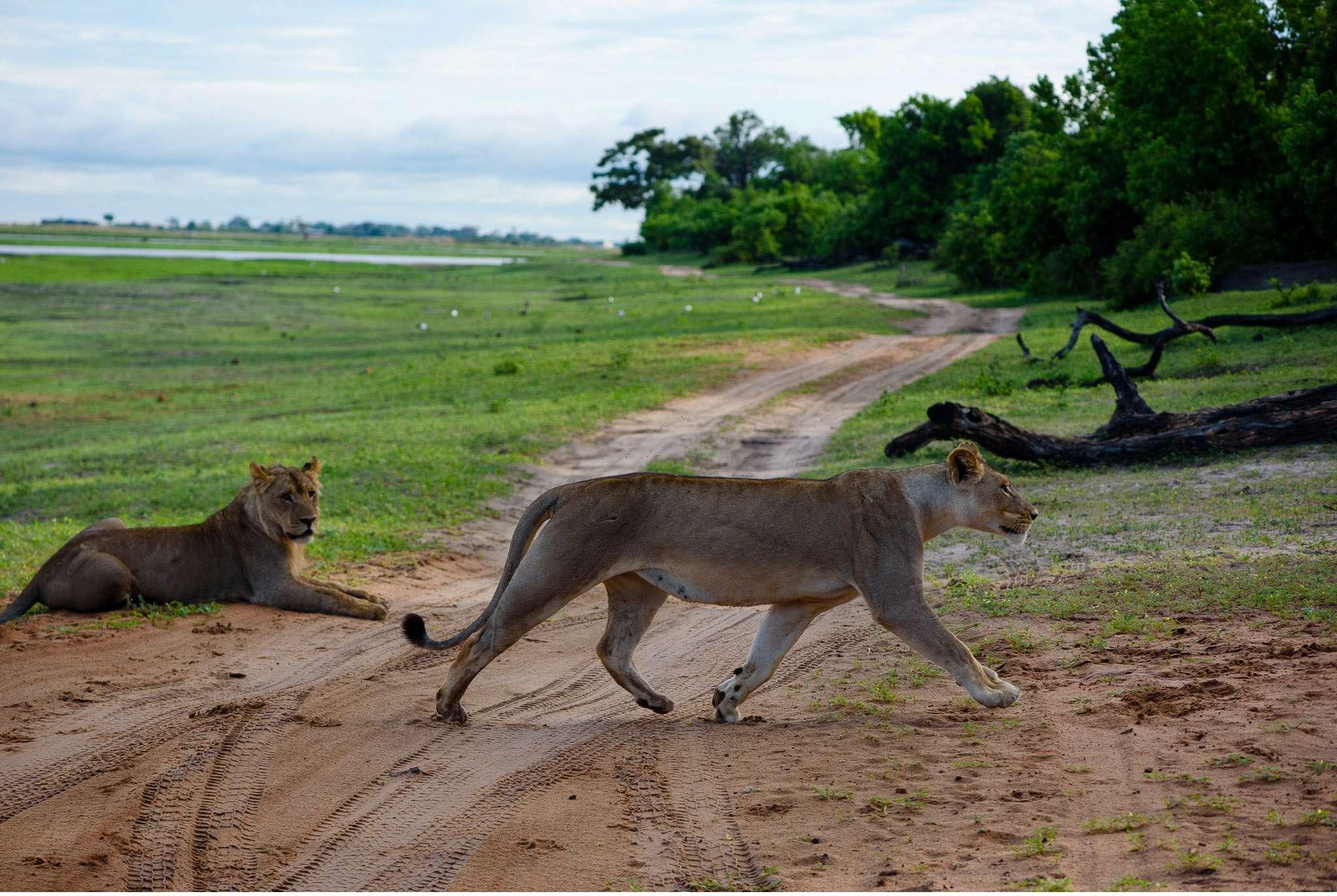 Chobe Nationalpark Botswana und Victoriafalls Zambia-33