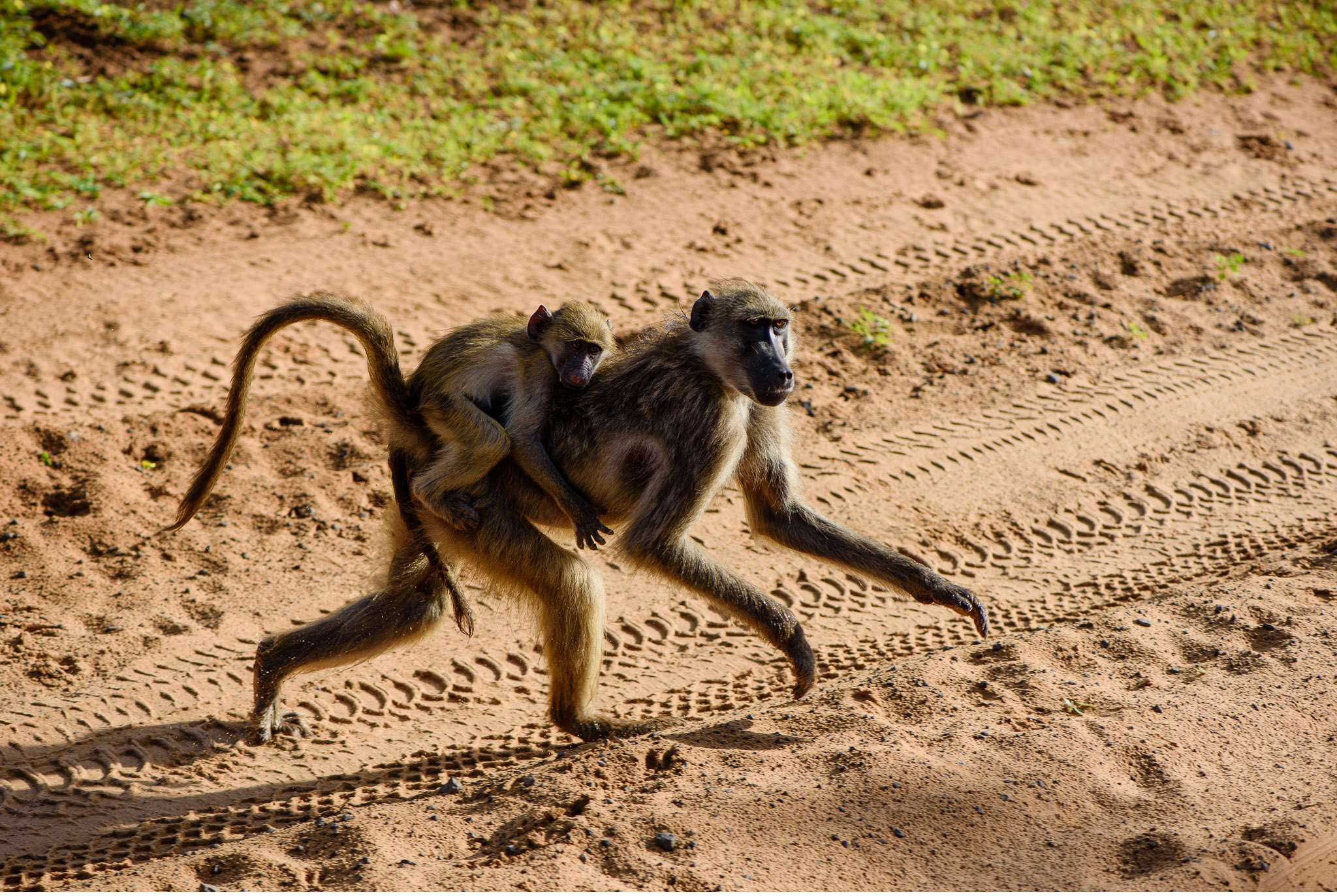 Chobe Nationalpark Botswana und Victoriafalls Zambia-41