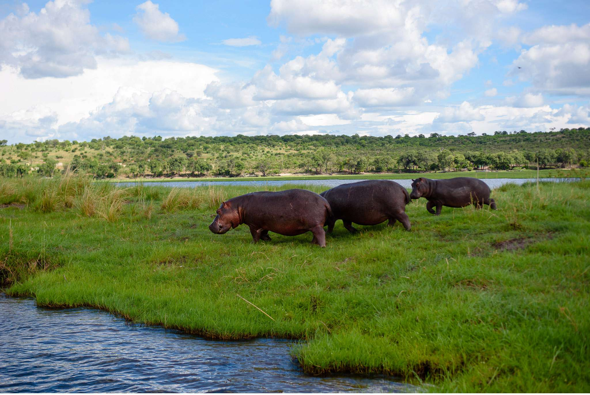 Chobe Nationalpark Botswana und Victoriafalls Zambia-75
