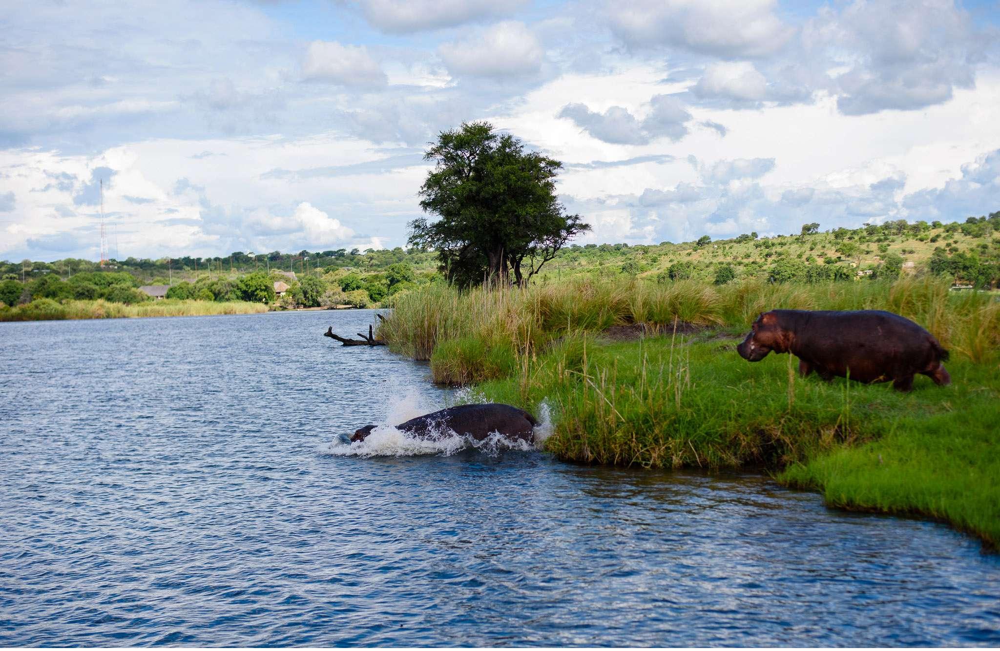 Chobe Nationalpark Botswana und Victoriafalls Zambia-76