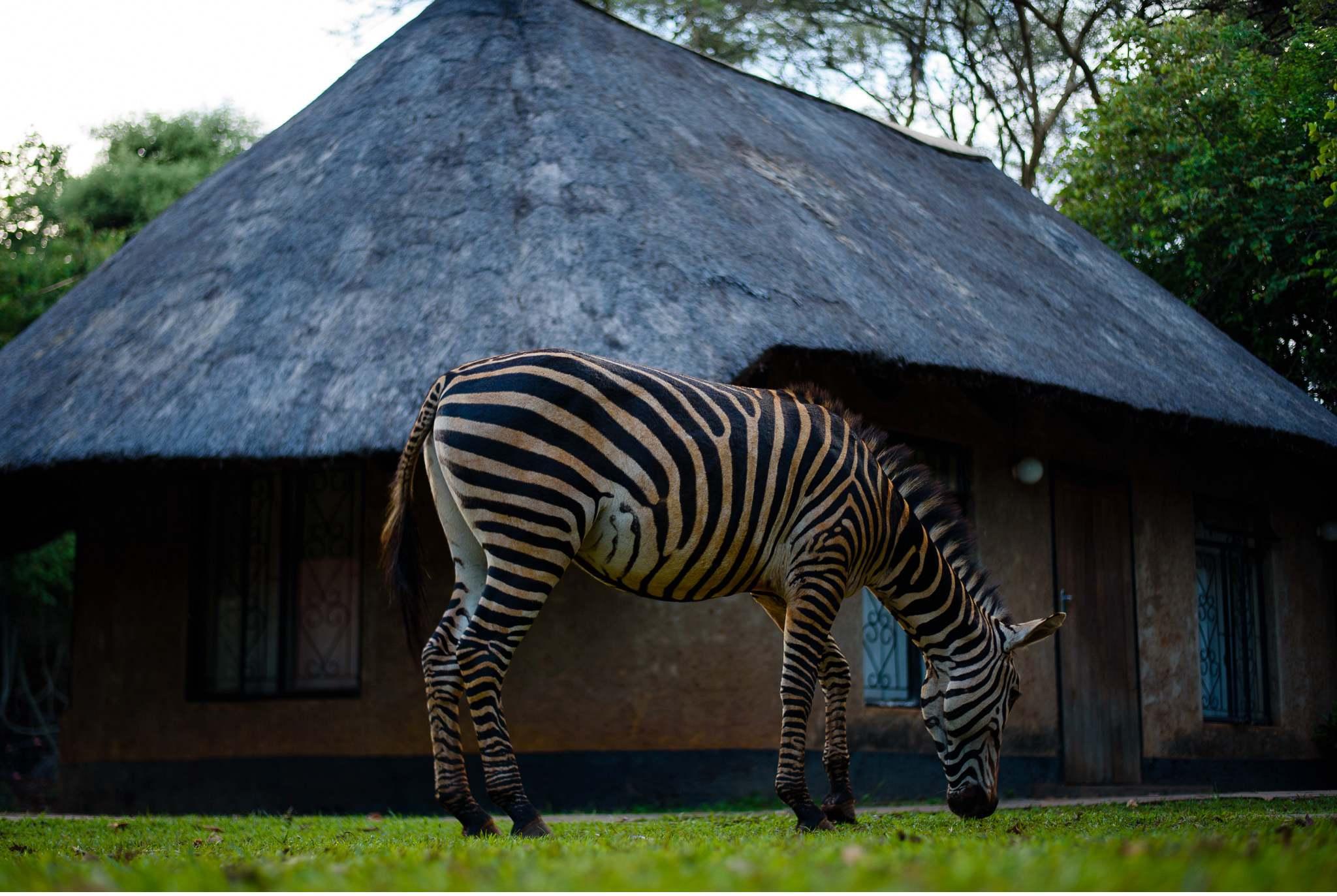 Lusaka-Zambia-Geschichten von unterwegs by Marion und Daniel-20