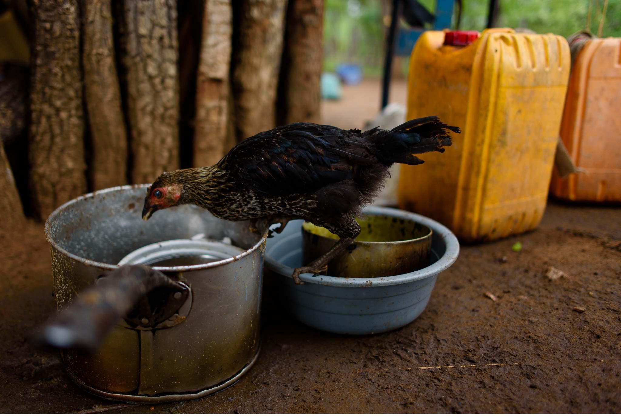 Vom South Luangwa in Zambia an den Malawi See - Marion und Daniel - Geschichten von unterwegs-21
