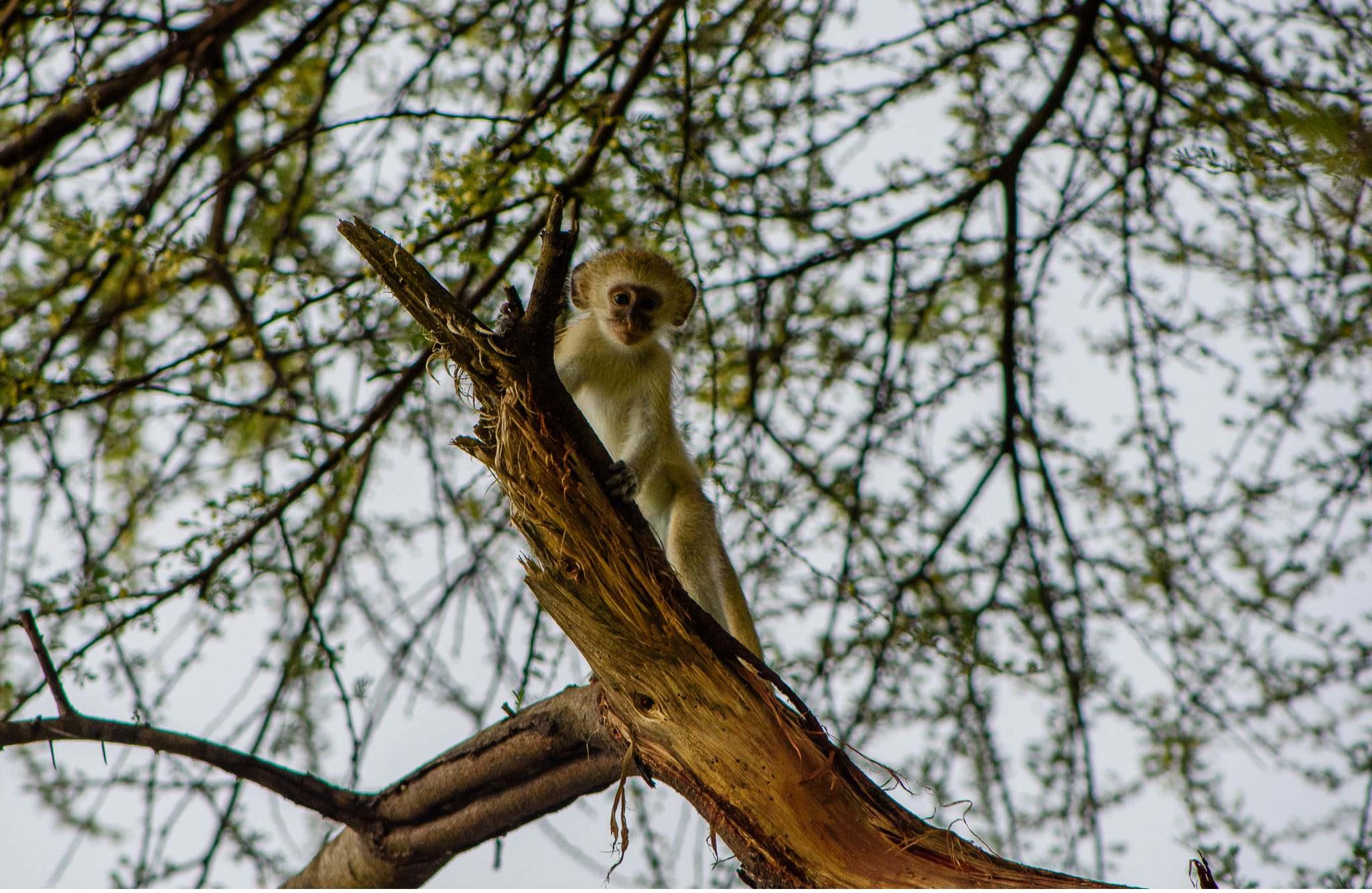 Vom South Luangwa in Zambia an den Malawi See - Marion und Daniel - Geschichten von unterwegs-30