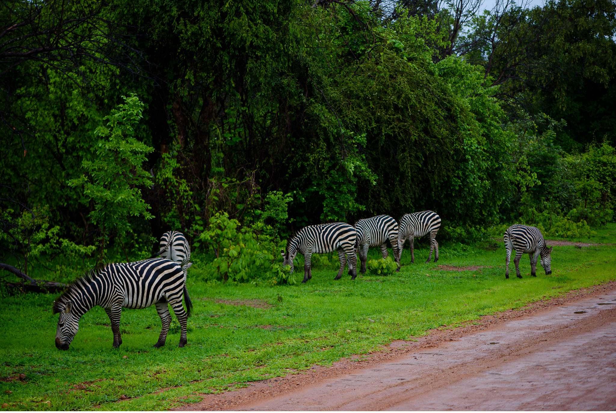 Vom South Luangwa in Zambia an den Malawi See - Marion und Daniel - Geschichten von unterwegs-41