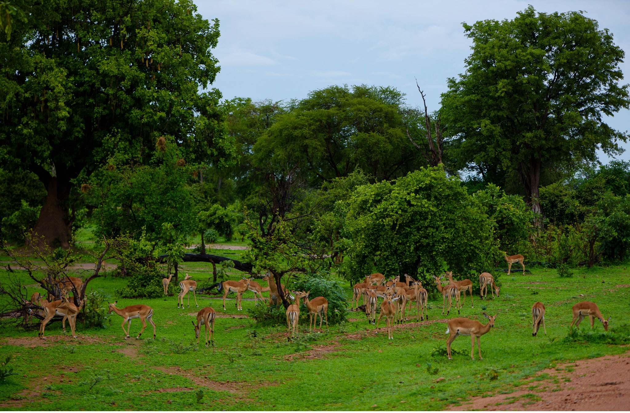 Vom South Luangwa in Zambia an den Malawi See - Marion und Daniel - Geschichten von unterwegs-45
