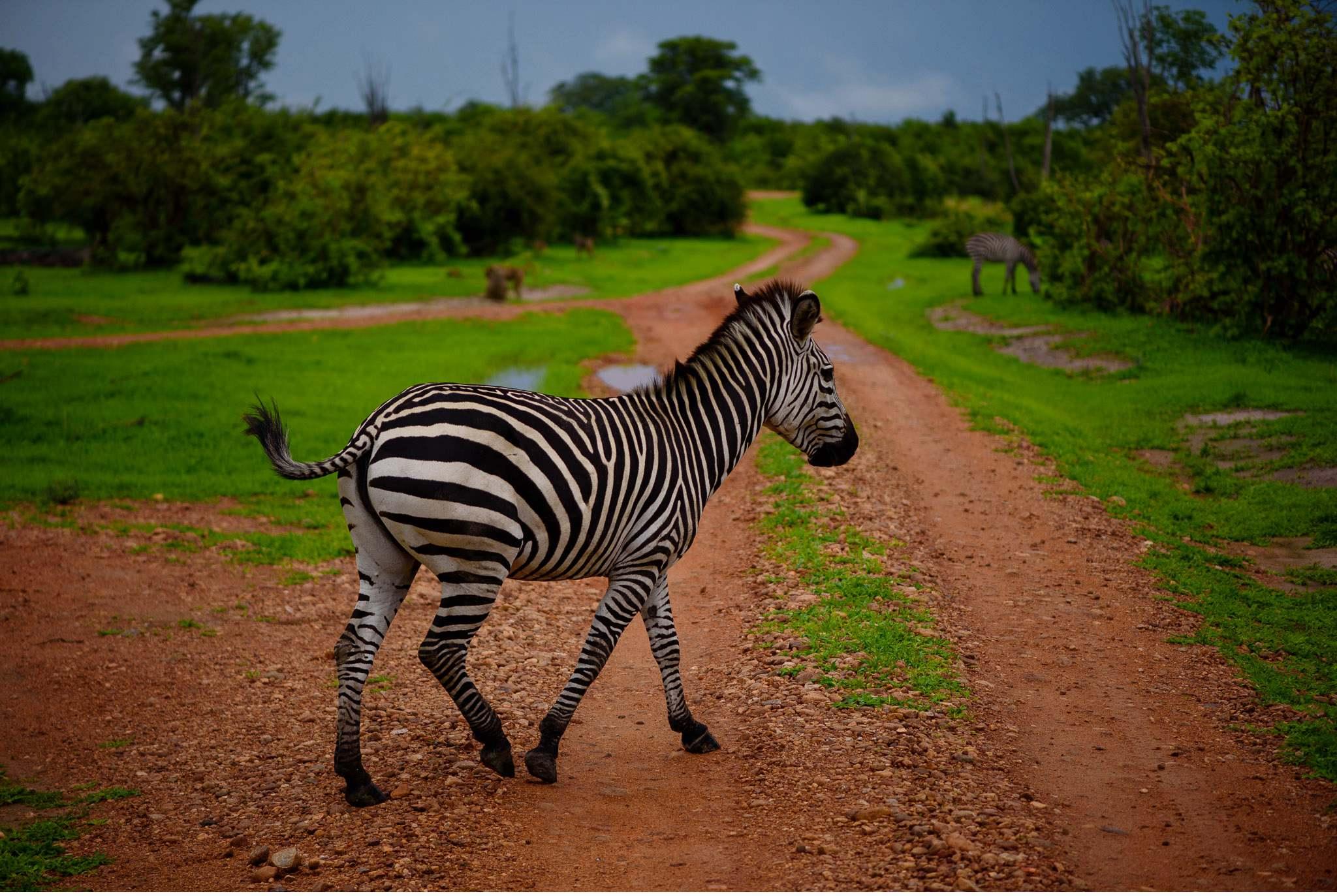 Vom South Luangwa in Zambia an den Malawi See - Marion und Daniel - Geschichten von unterwegs-46