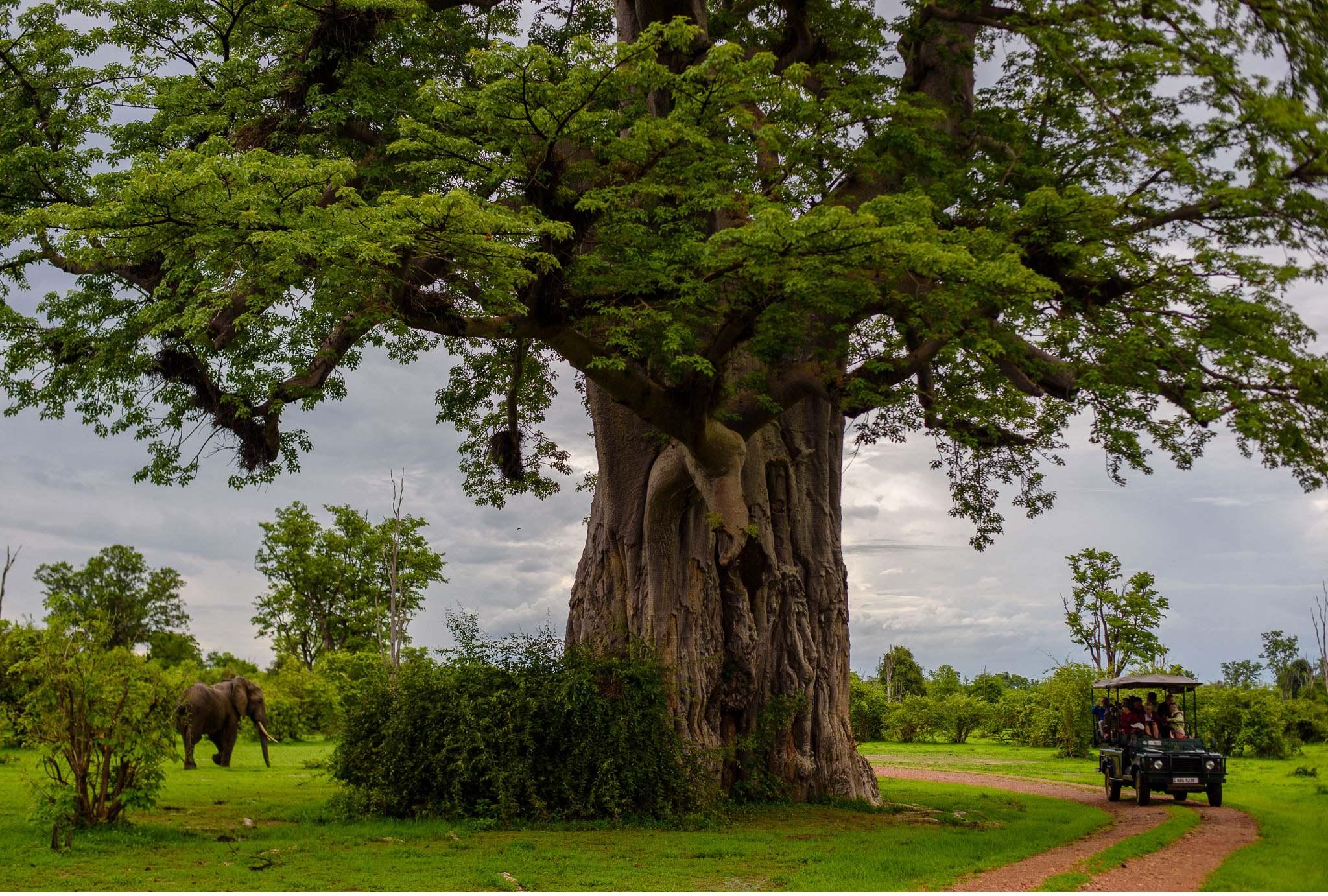 Vom South Luangwa in Zambia an den Malawi See - Marion und Daniel - Geschichten von unterwegs-47