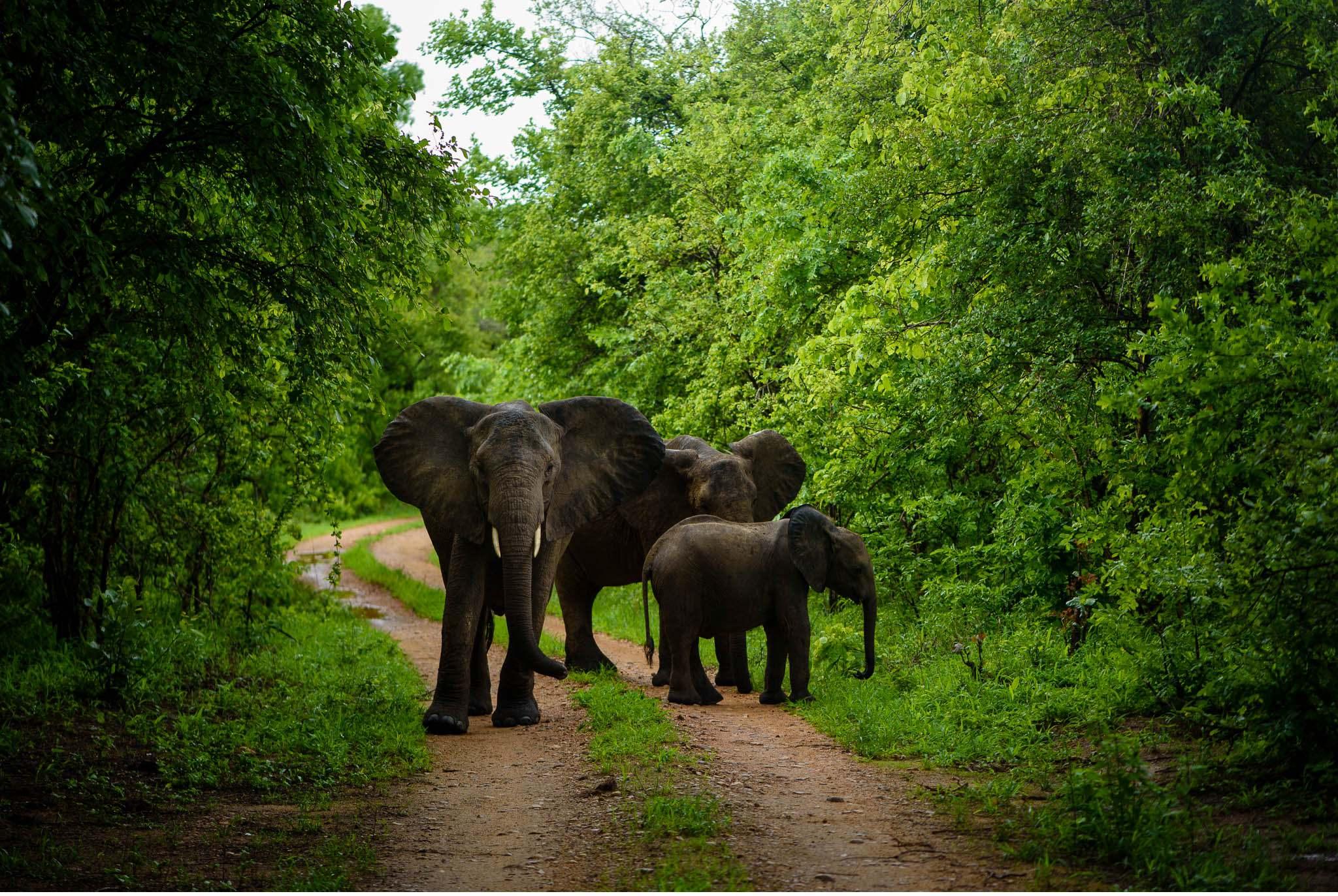 Vom South Luangwa in Zambia an den Malawi See - Marion und Daniel - Geschichten von unterwegs-57