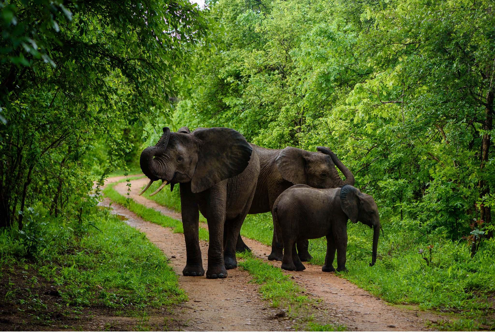 Vom South Luangwa in Zambia an den Malawi See - Marion und Daniel - Geschichten von unterwegs-58