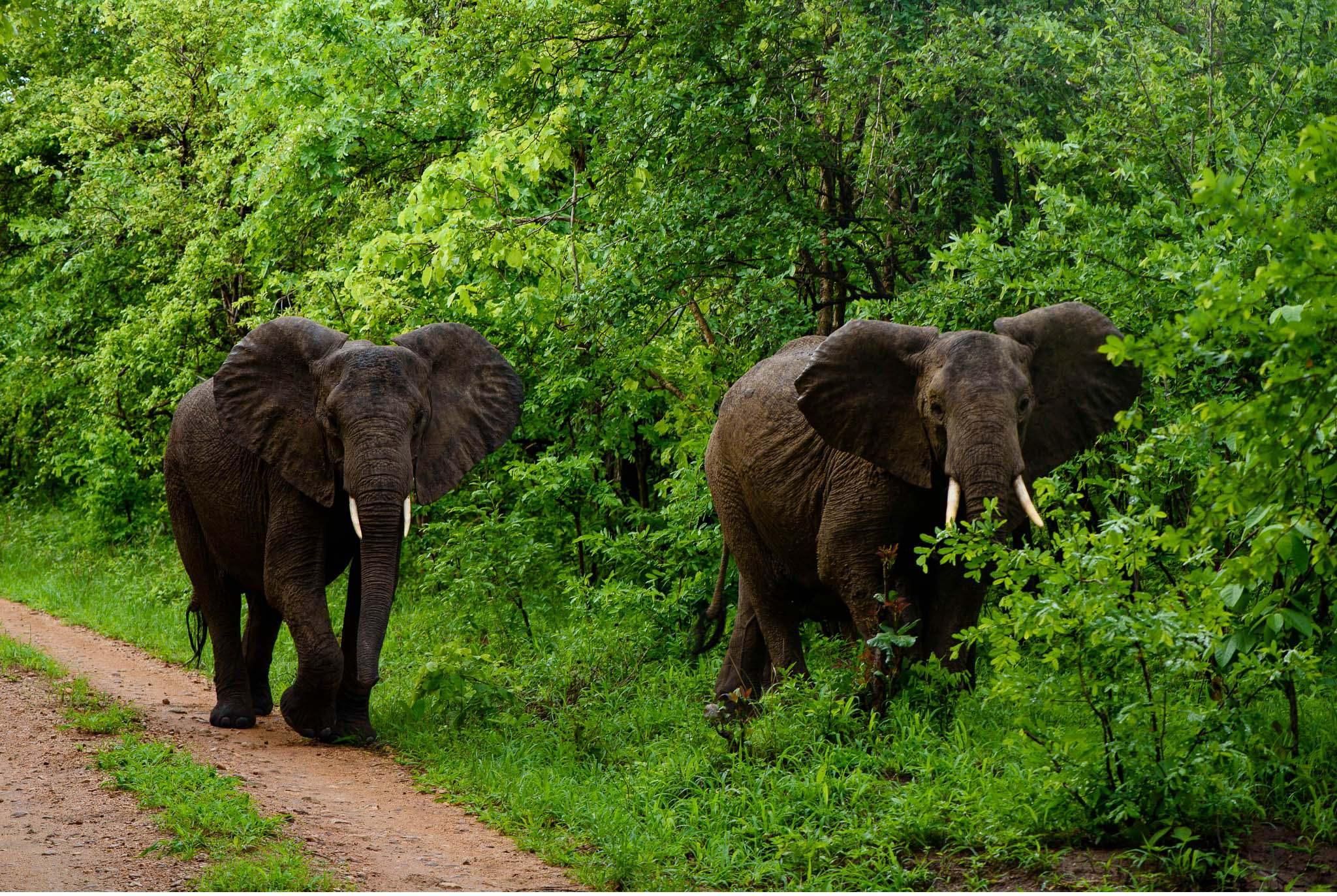Vom South Luangwa in Zambia an den Malawi See - Marion und Daniel - Geschichten von unterwegs-59