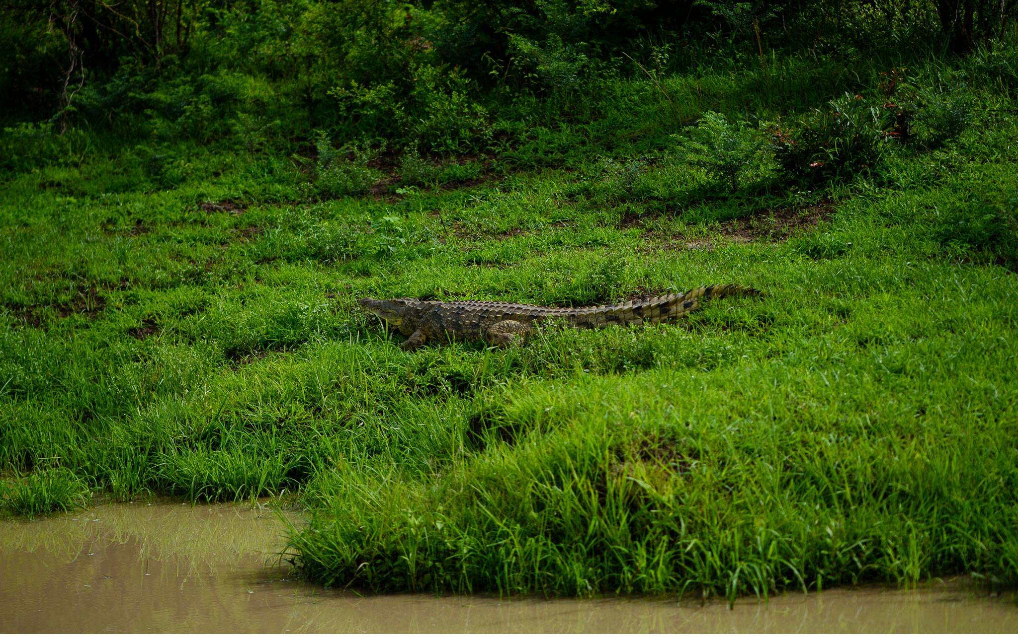 Vom South Luangwa in Zambia an den Malawi See - Marion und Daniel - Geschichten von unterwegs-61