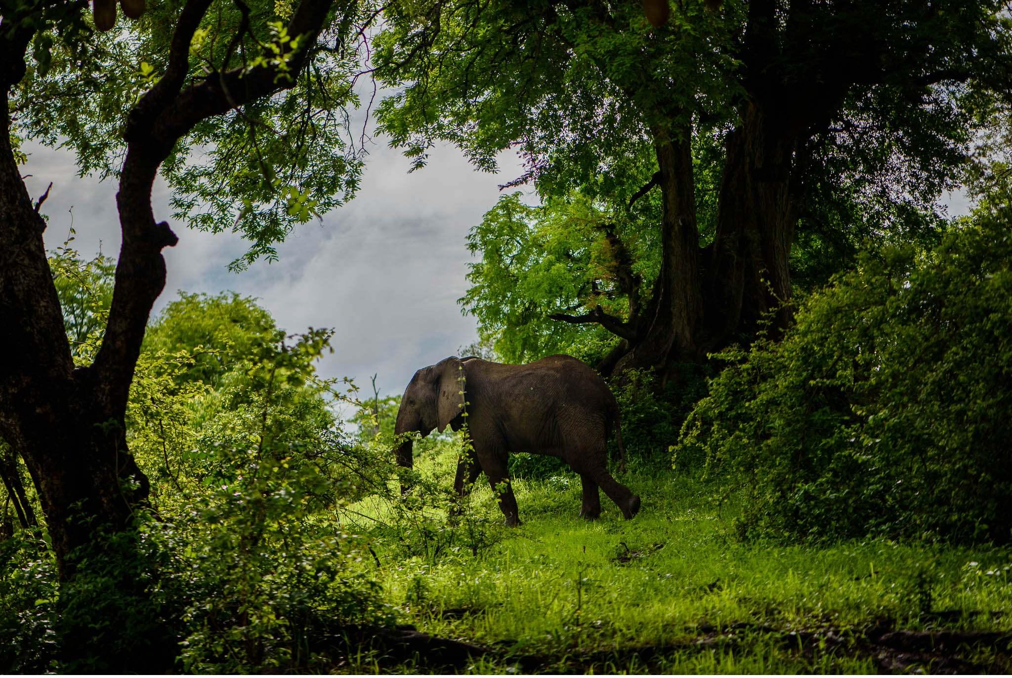 Vom South Luangwa in Zambia an den Malawi See - Marion und Daniel - Geschichten von unterwegs-62