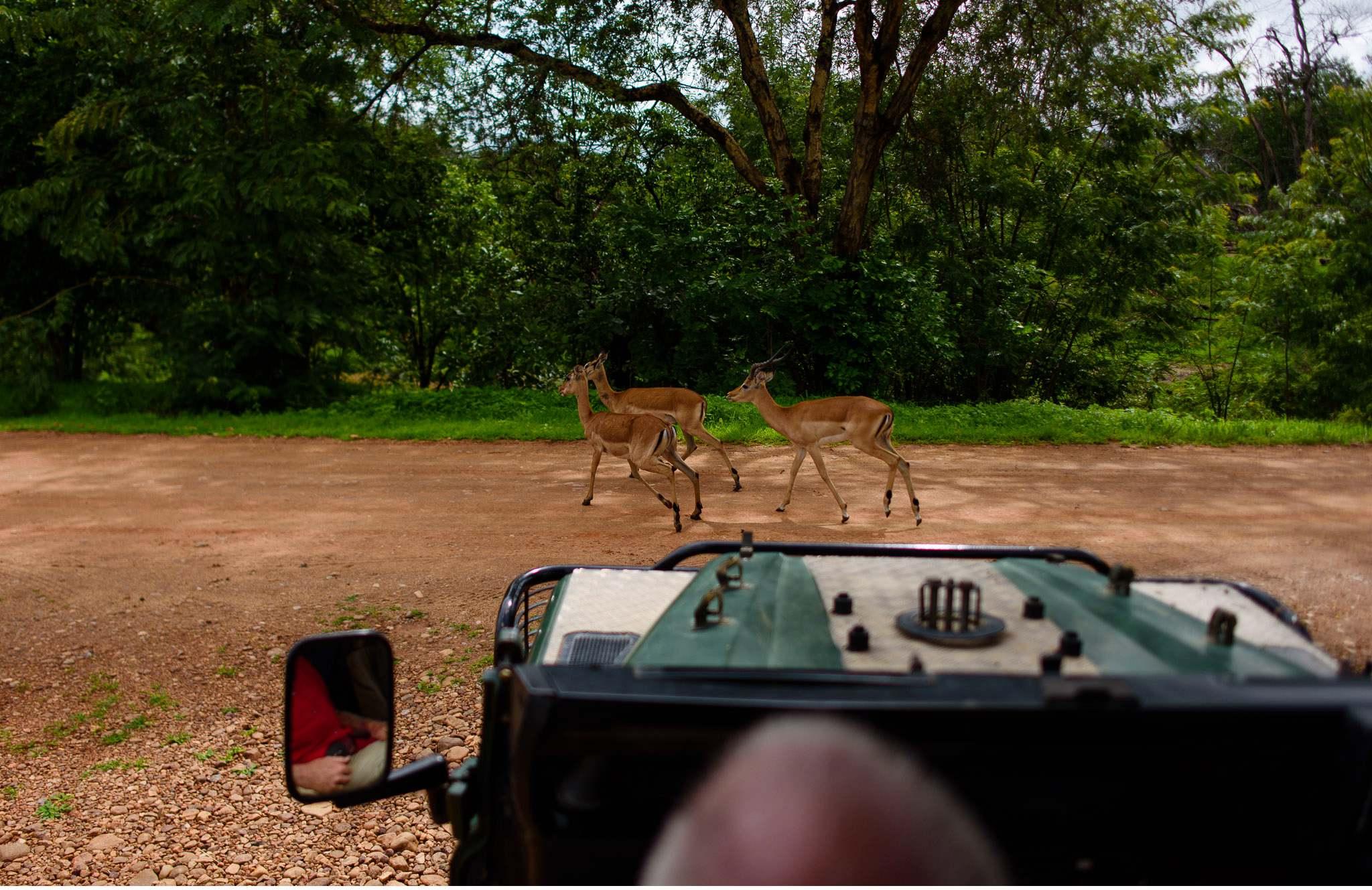 Vom South Luangwa in Zambia an den Malawi See - Marion und Daniel - Geschichten von unterwegs-72