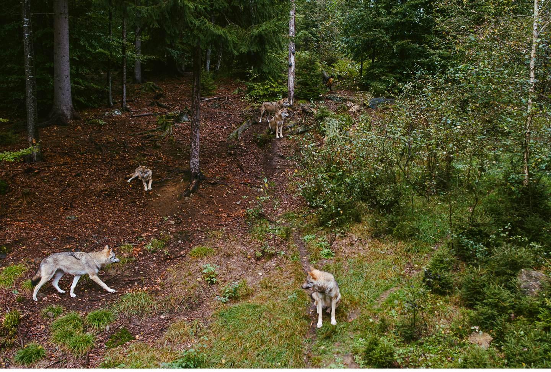 goldsteig-bayrischer-wald-top-trails-of-germany-52-von-70
