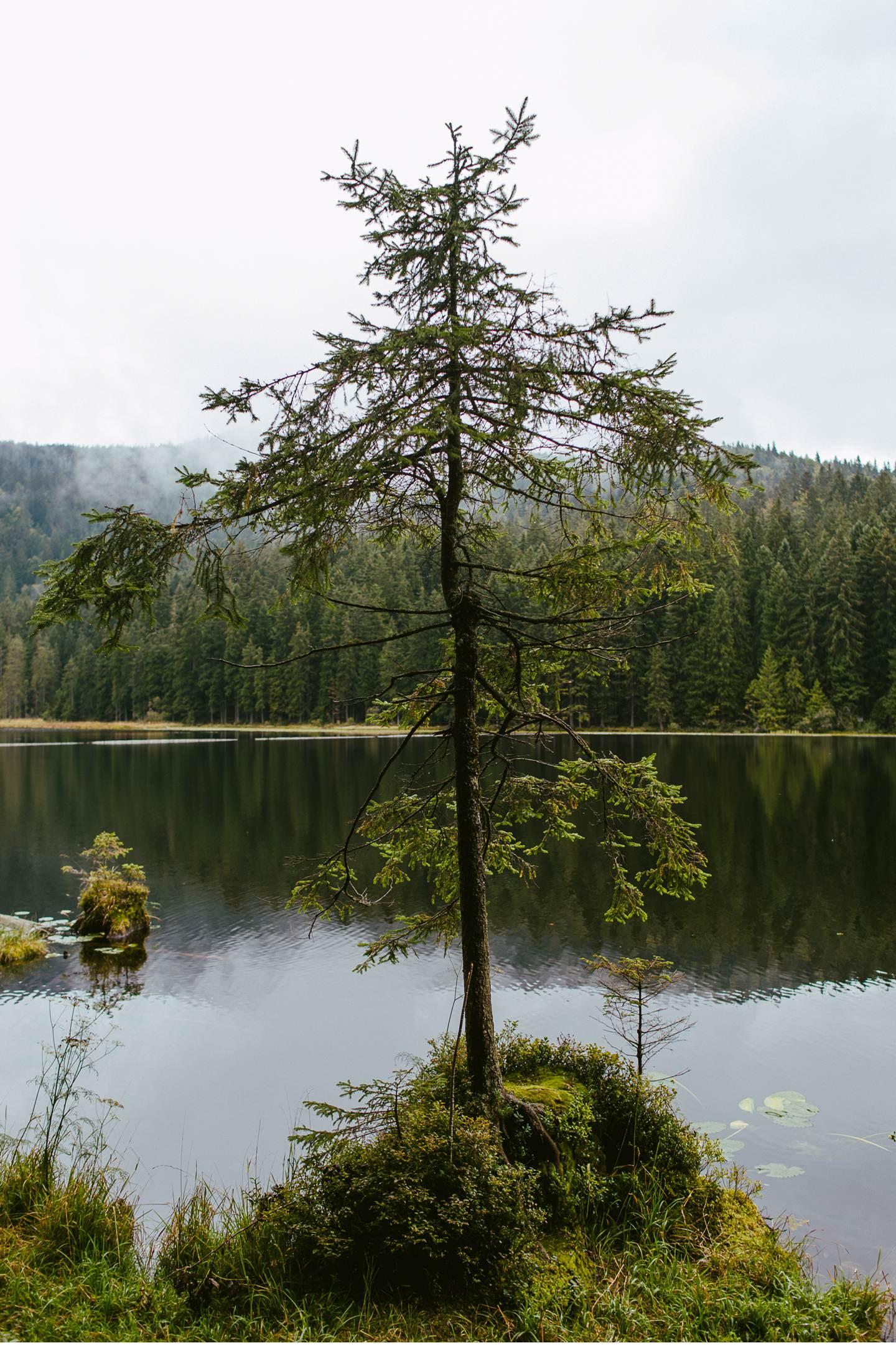 goldsteig-bayrischer-wald-top-trails-of-germany-64-von-70