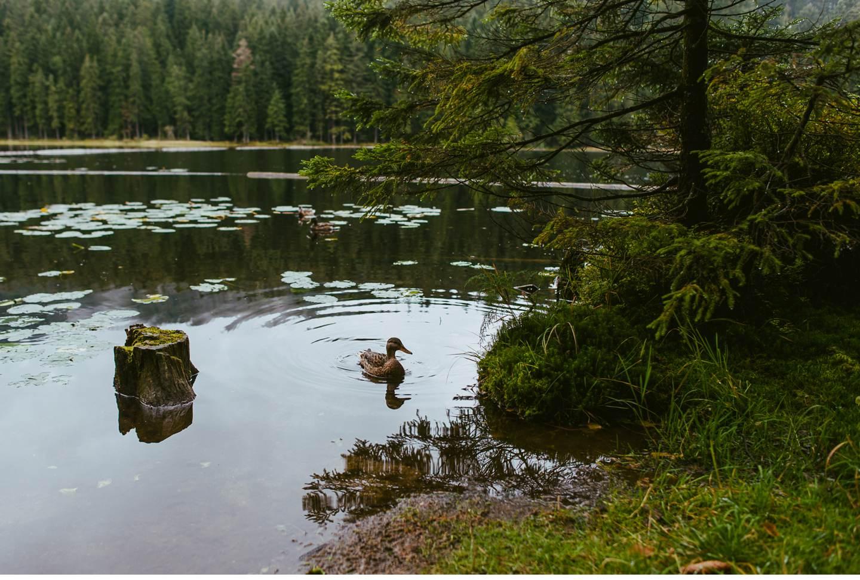 goldsteig-bayrischer-wald-top-trails-of-germany-70-von-70