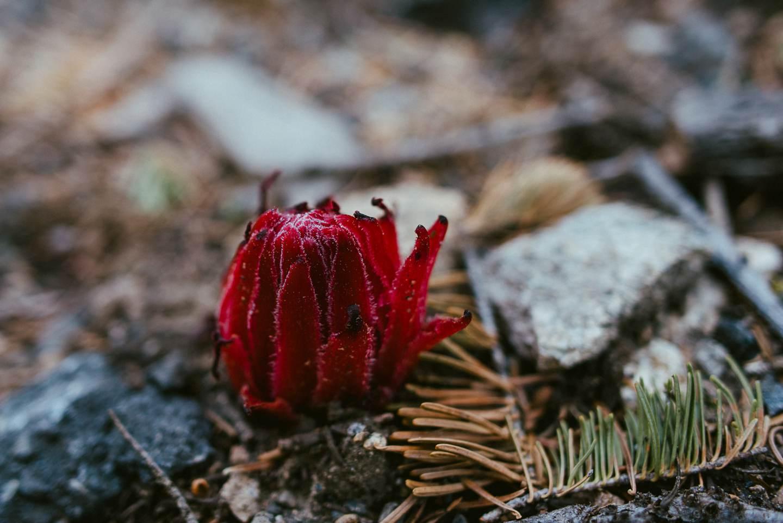 yosemite-nationalpark-california-37