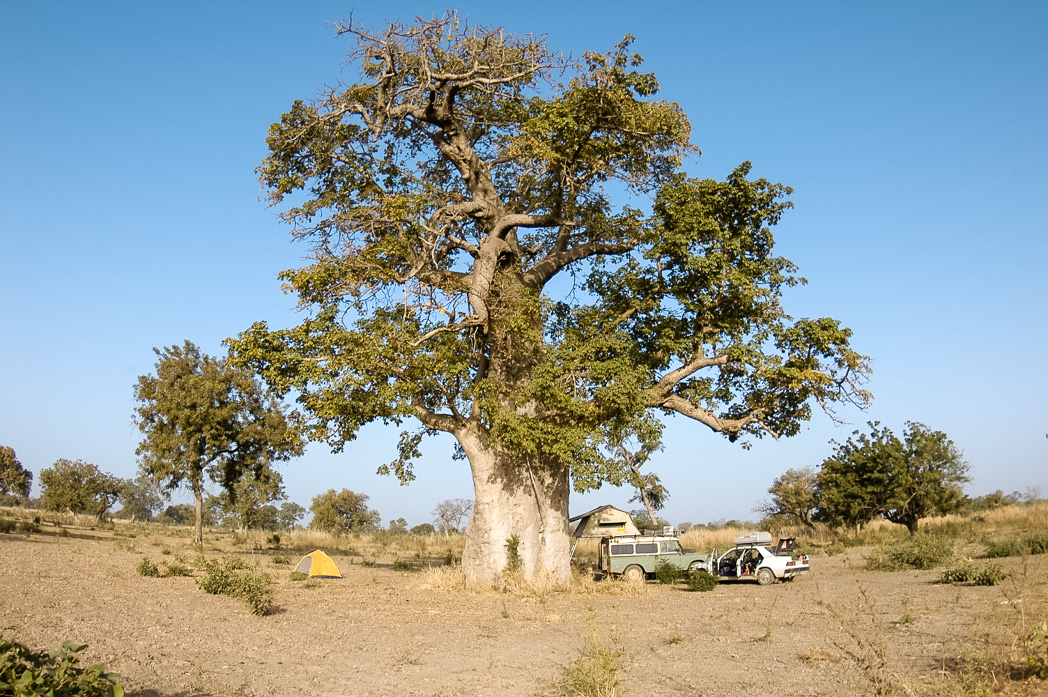 Senegambia- Eine Reise rund um Afrika-50