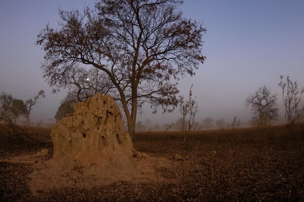 Senegambia- Eine Reise rund um Afrika-58