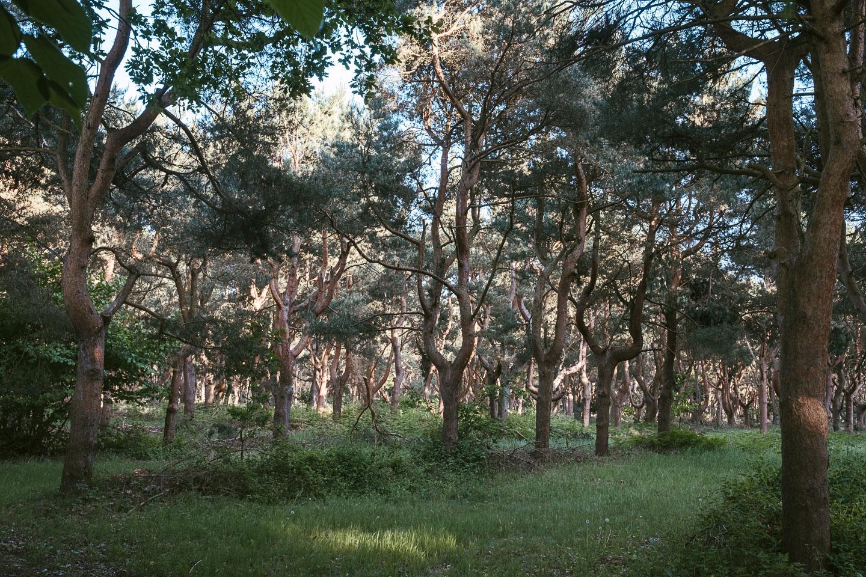 Horizonte Zingst - Fotofestival - Ostsee - Geschichten von unterwegs (94 von 102)