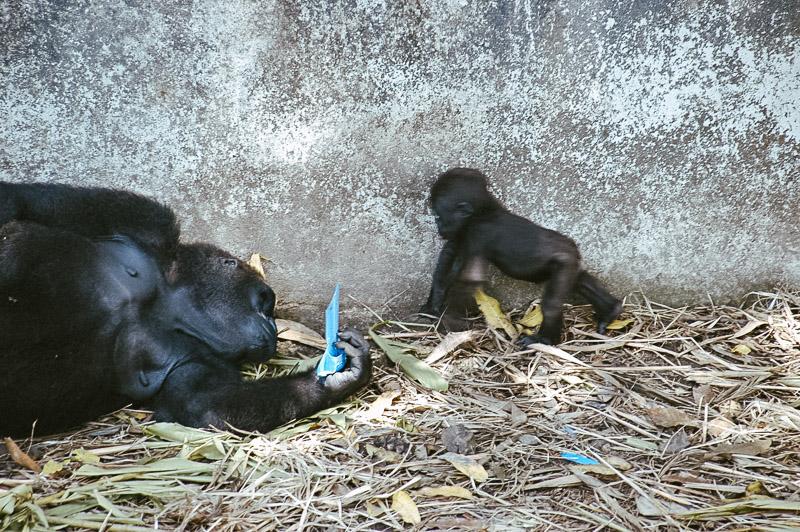 KAMERUN - Eine reise rund um Afrika - Geschichten von unterwegs-8521