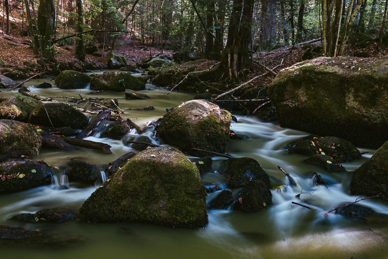 Naturschutzgebiet Hölle - Regensburg - Geschichten von unterwegs -3444