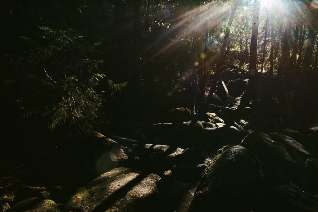 Naturschutzgebiet Hölle - Regensburg - Geschichten von unterwegs -3639