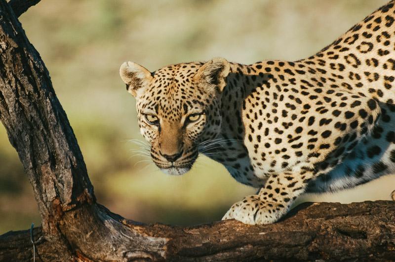 Namibia-Africa-Overland-20