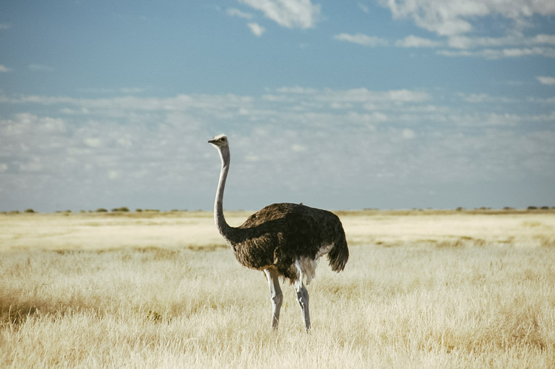 Namibia-Africa-Overland-42