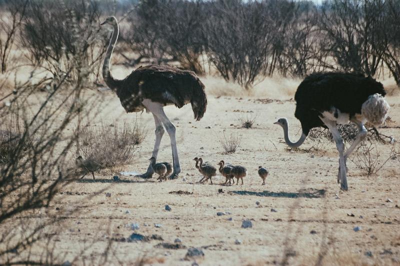Namibia-Africa-Overland-9