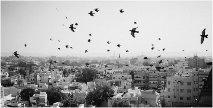 Rundreise durch Gujarat in Indien mit Rotel Tours. Marion and Daniel. Reisereportagen, Reiseblogger,Fotografie und Film-94