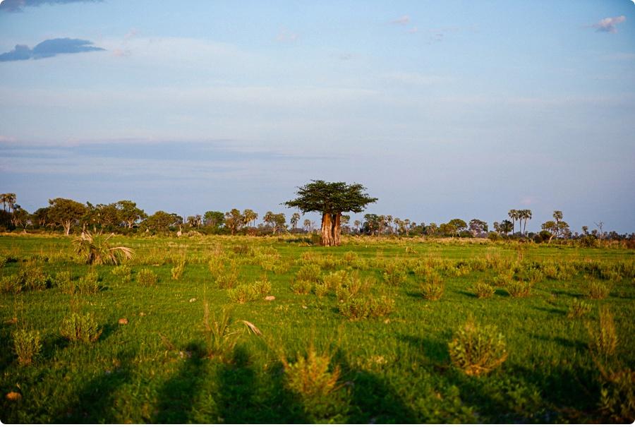 Afrika Teil1 - Von WIndhoek,Namibia nach Botswana ins Okavango Delta (106 von 118)