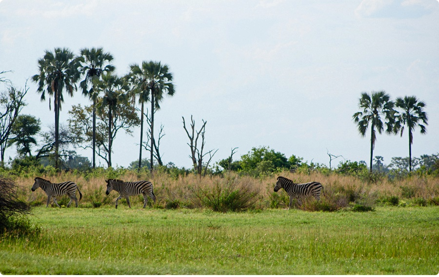 Afrika Teil1 - Von WIndhoek,Namibia nach Botswana ins Okavango Delta (69 von 118)