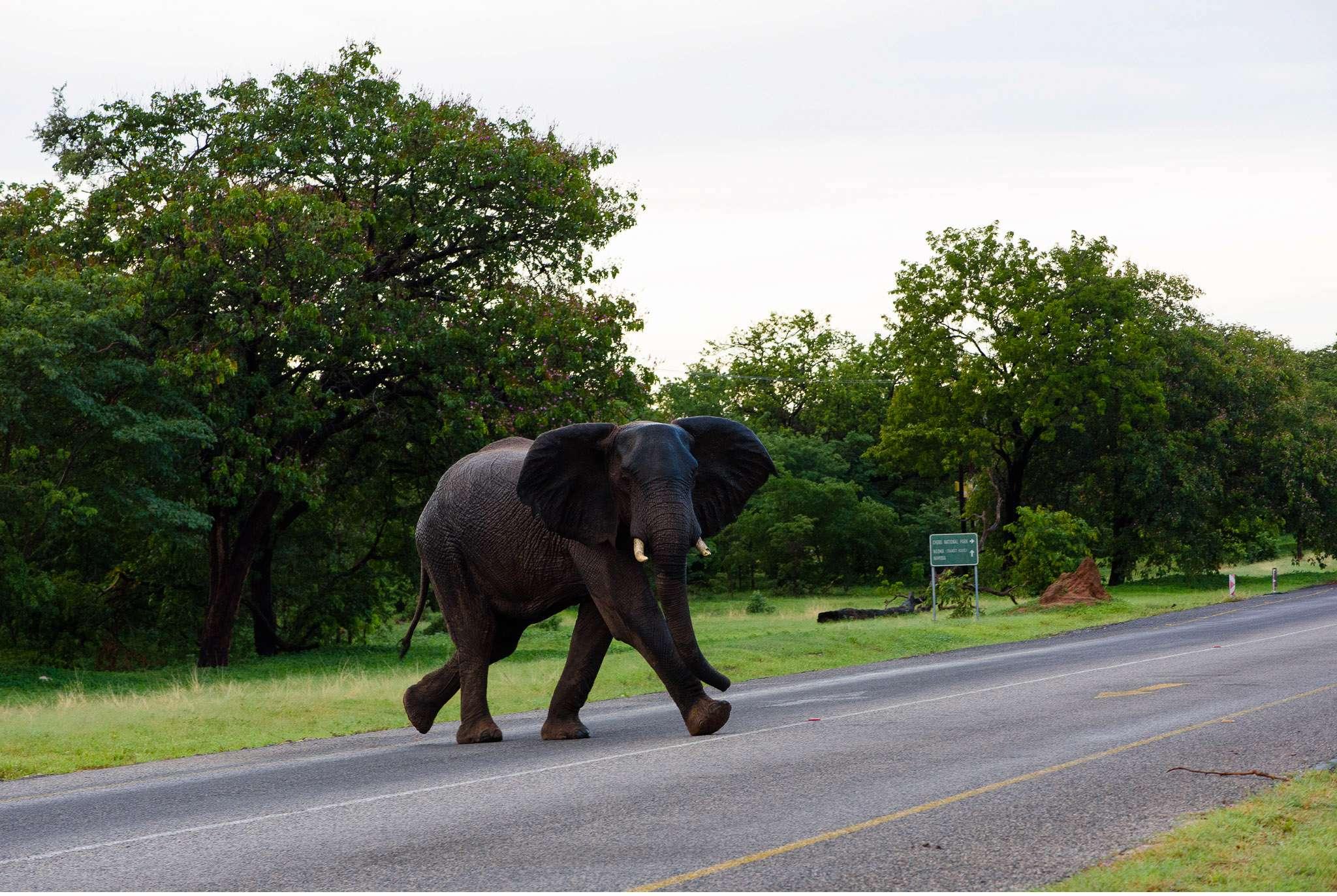 Chobe Nationalpark Botswana und Victoriafalls Zambia-16