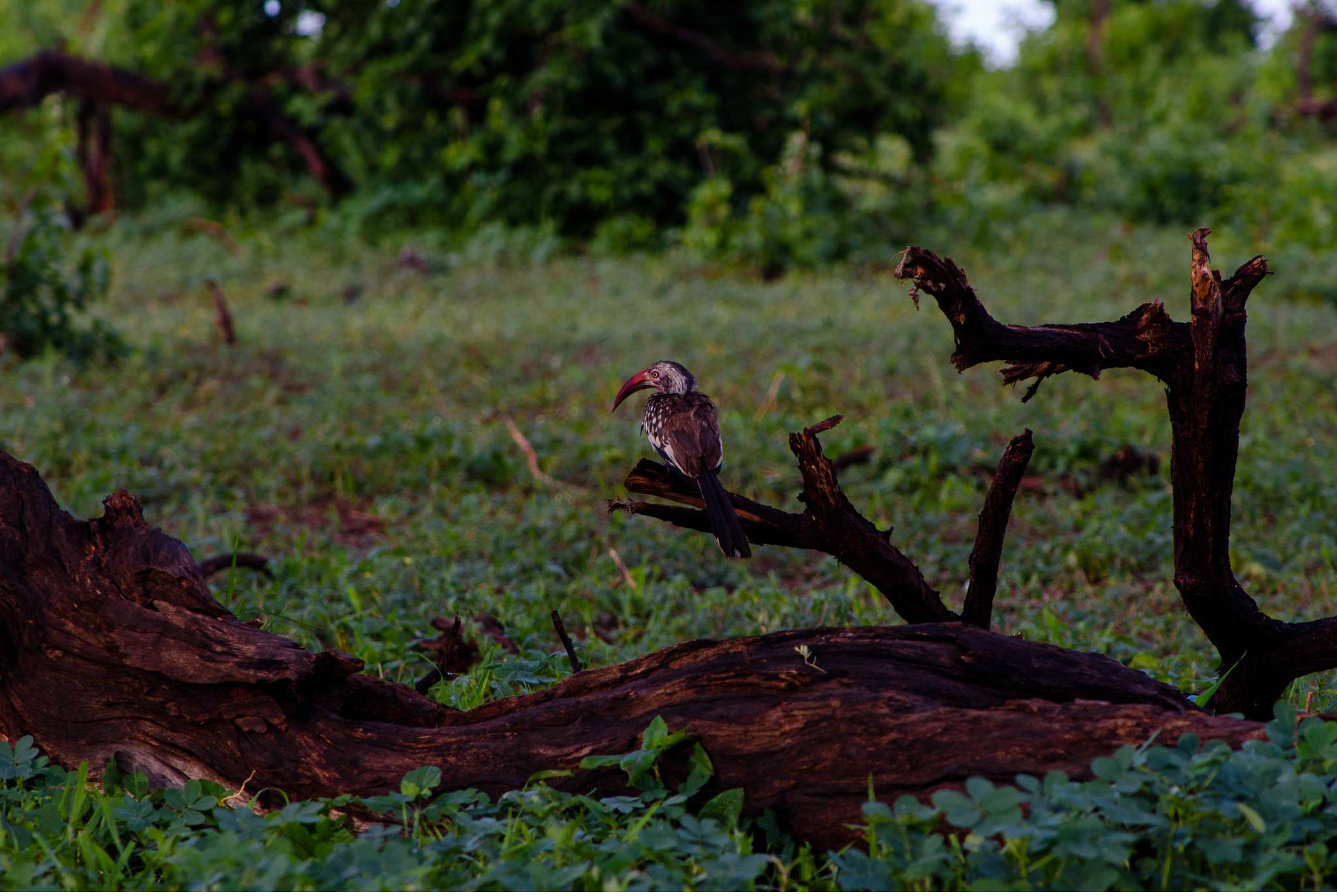 Chobe Nationalpark Botswana und Victoriafalls Zambia-20
